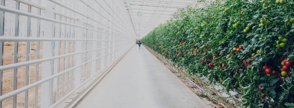 Gestión de Éxito para Empresas Agroalimentarias